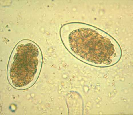 Miscellaneous nematodes