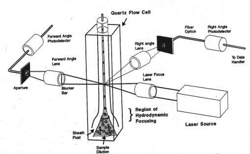 The Speed of Light Analysis Essay